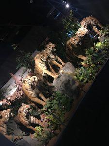natural-history-museum-geneva